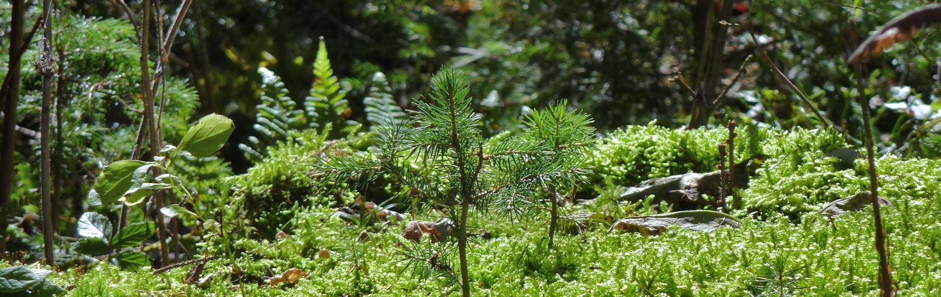 Wald und Natur Lippenhof