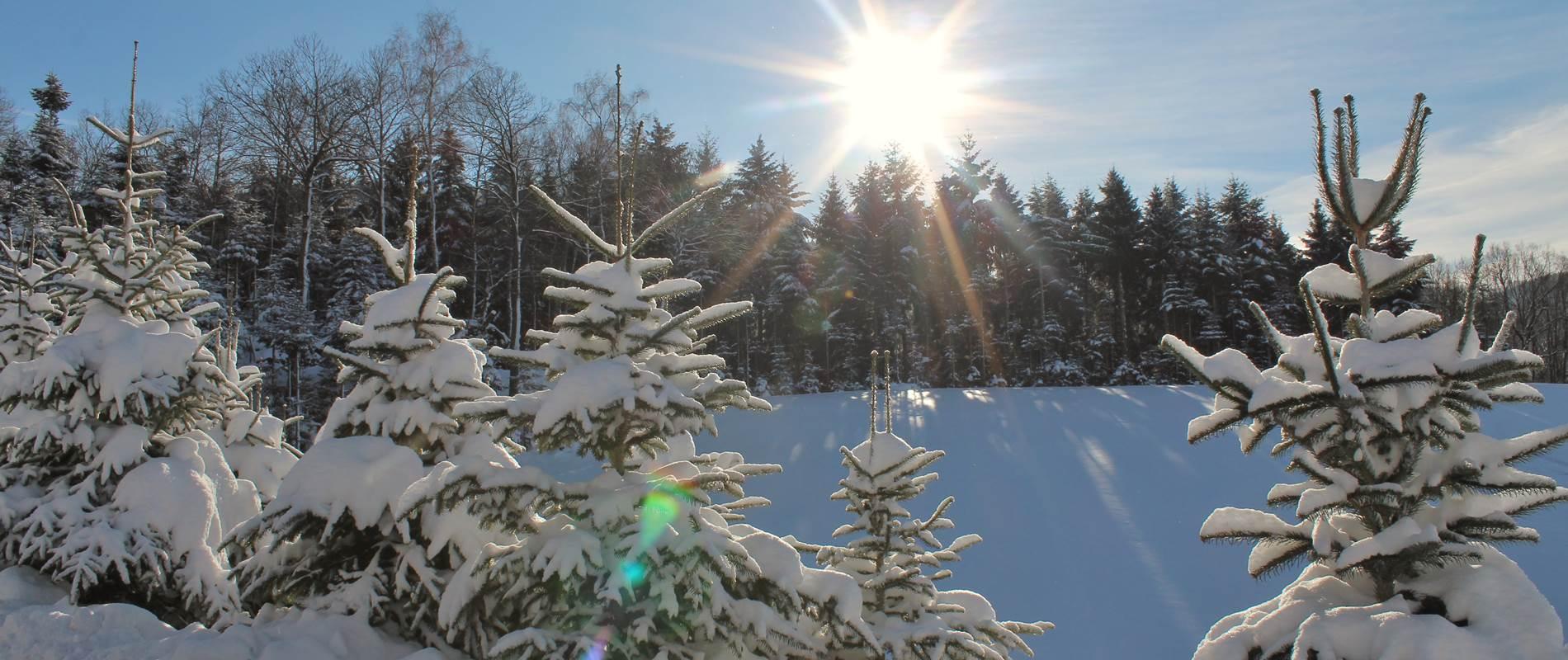 Winterparadies Lippenhof