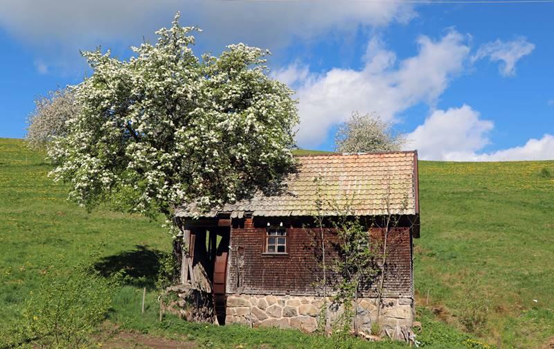 alte-muehle-lippenhof-breitnau
