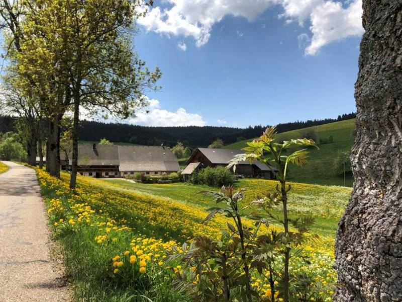 lippenhof-anfahrt