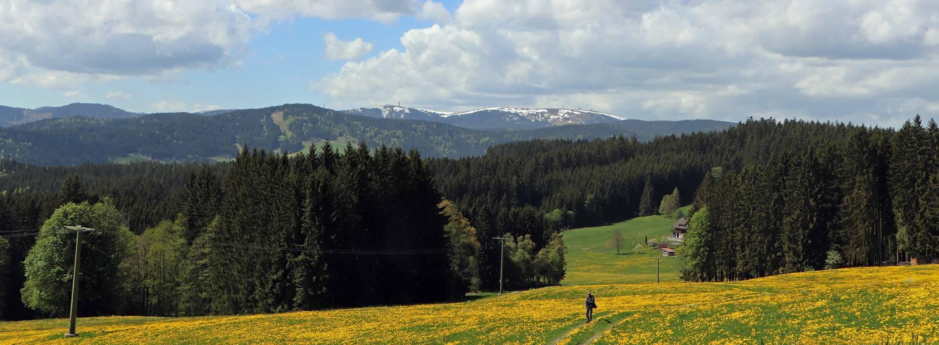 Ausflugsziel Feldberg Breitnau
