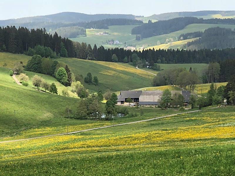 lippenhof-im-fruehling