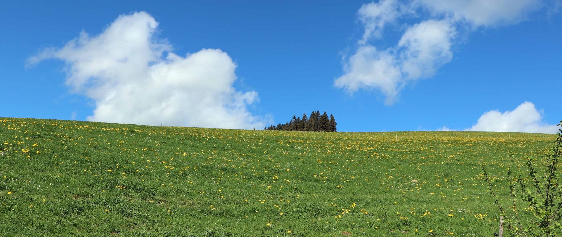 Hochschwarzwald Lippenhof Breitnau