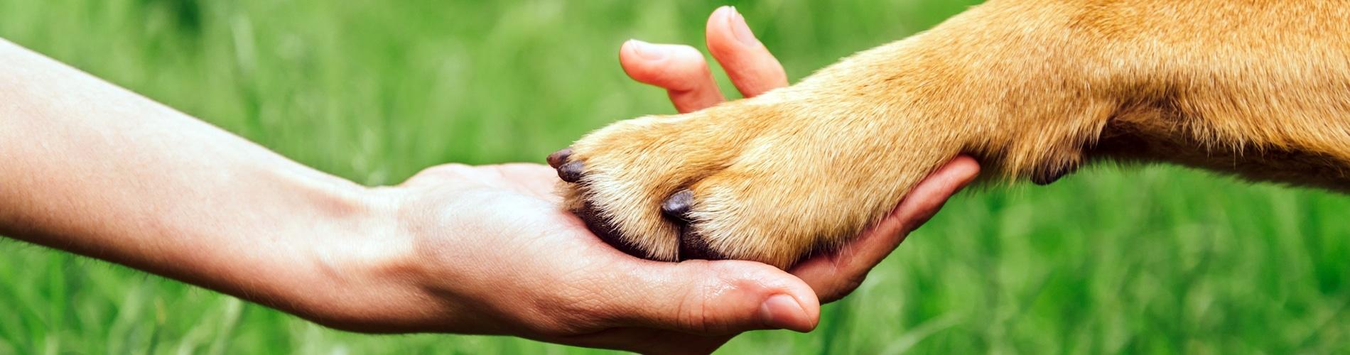 Menschenhand und Hundepfote